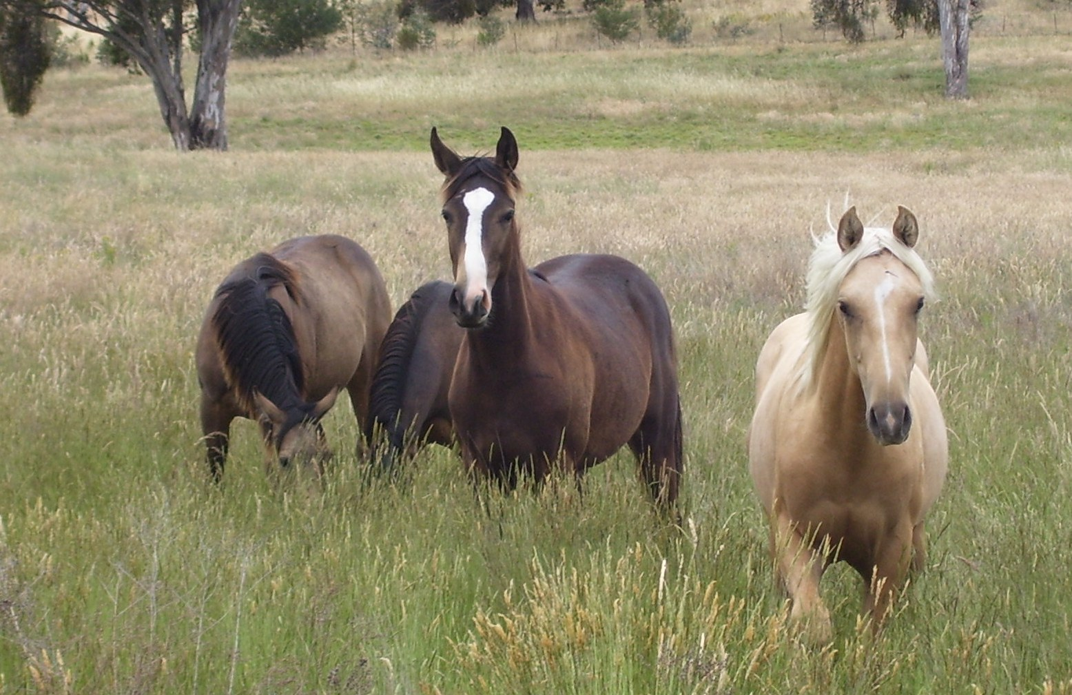 Remmies Yearlings